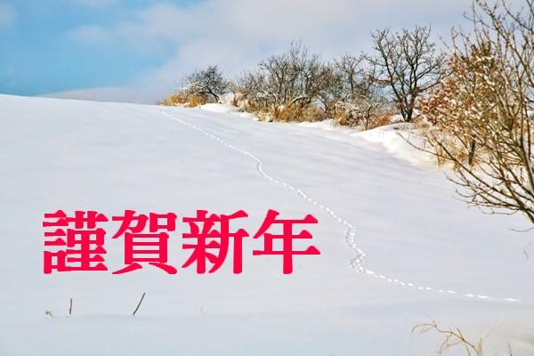IMG_8230-1-1.jpg